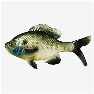 """The Gill - Swimbait- 5.25"""" - Natural Sunfish"""